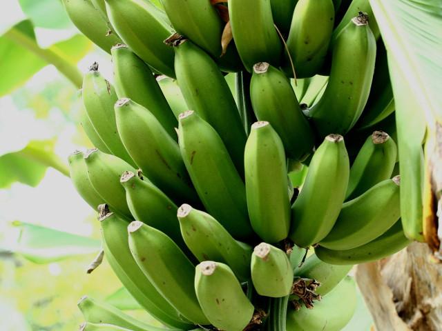 Bananele contin un chimical...