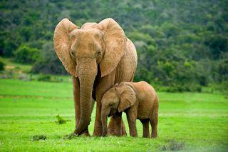 #10: Elefantii