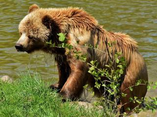 Ursii hiberneaza iarna
