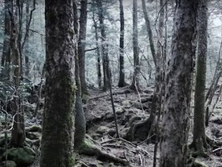 Padurea Aokigahara - Japonia