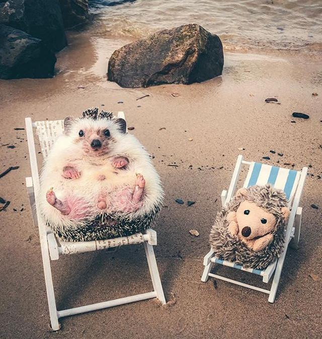 Arici la plaja