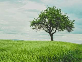 Spionul din copac