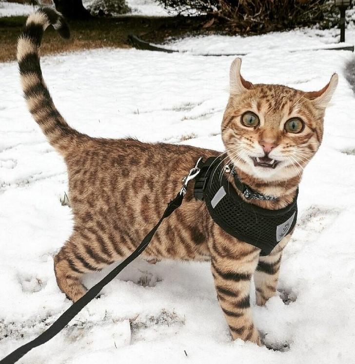 O pisica deloc incantata sa...
