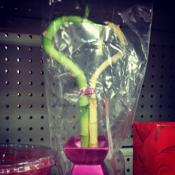 Floare de oferit de Valentine`s Day sau mai bine NU