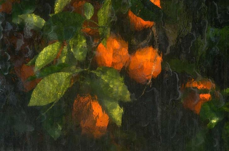 Portocale pozate printr-un...