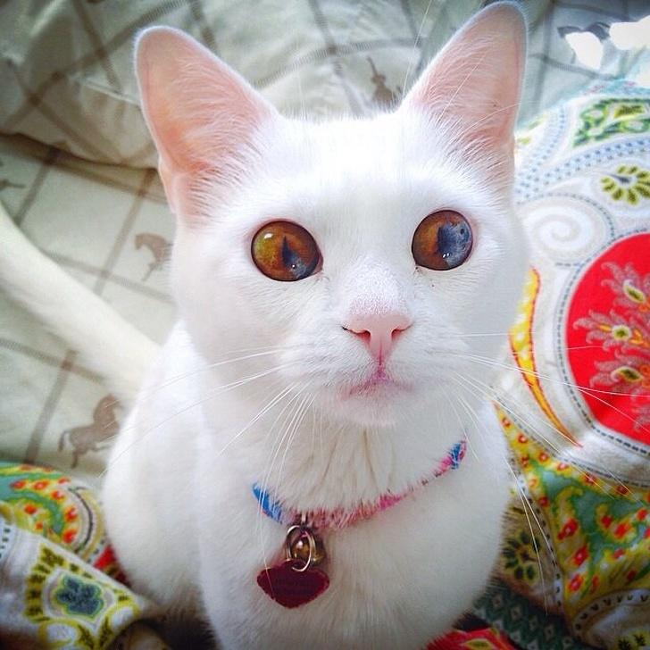 O pisica a carei privire te...