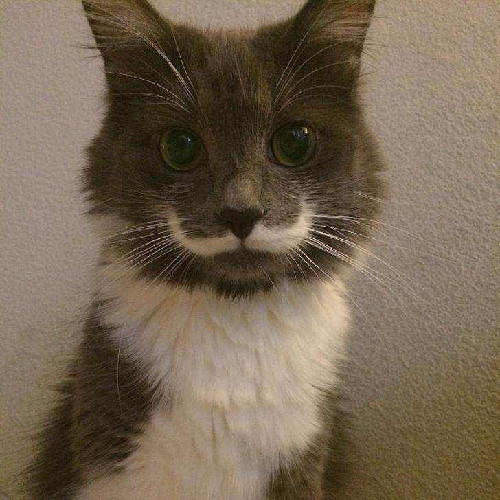 O pisica ce are infatisarea...